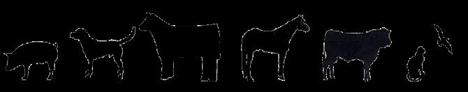 Chachere Veterinary Clinic